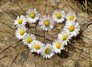 daisy heart chain